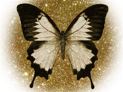 wallpapers of glitter butterflies just for fun glitter butterfly margaret fitzpatrick