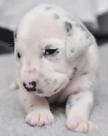newborn puppies cuteness overflow