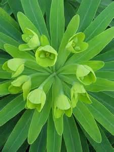 Green Garden Flowers Green Plants Apartmentgyan S