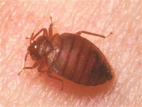 do bed bugs like light banishing bed bugs