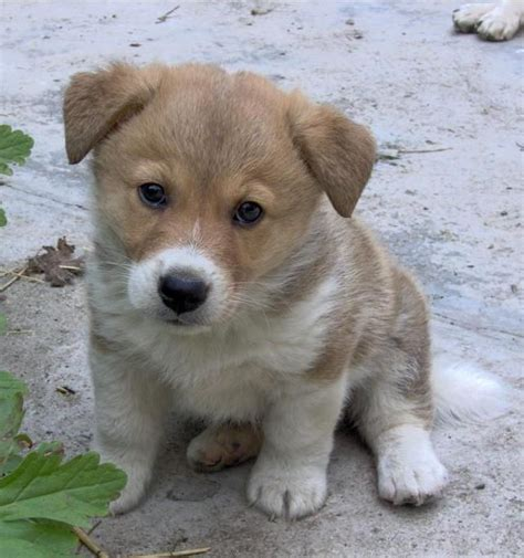 Non Shedding Cross Breed Dogs by Cross Breed Dogs Breeds Picture