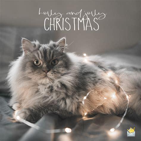 merry christmas wishes  season   jolly