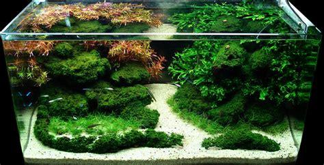 aquascape shop aquascape shop aquascape diorama aquescaping aquescaping