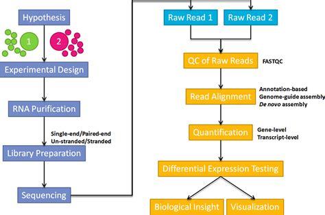 rnaseq workflow rna seq analysis workflow 183 rna seq data analysis