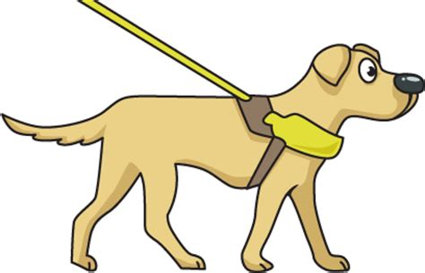 how to guide dogs how can schools and help guide dogs