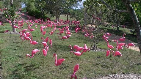 Botanical Garden Corpus Christi Roadrunner S Paradise Botanical Gardens Corpus Christi