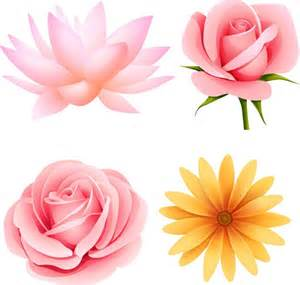 Lotus Flower Photoshop Pretty Flower Vector Material My Free Photoshop