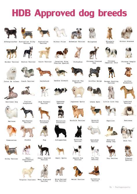 types  pets allowed  hdb paulng property