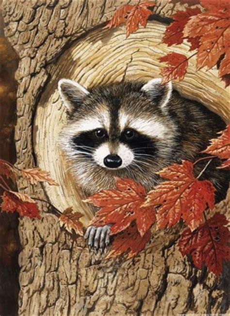 raccoon fine art print  william vanderdasson