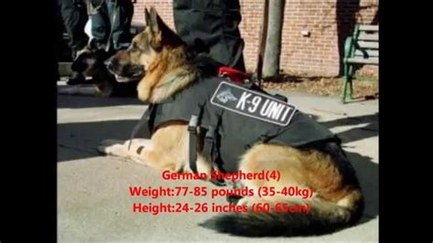 top 10 guard dogs top 10 guard dogs in the world