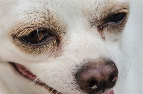 chewing paws remedy eye boogers what are they and how to get rid of them