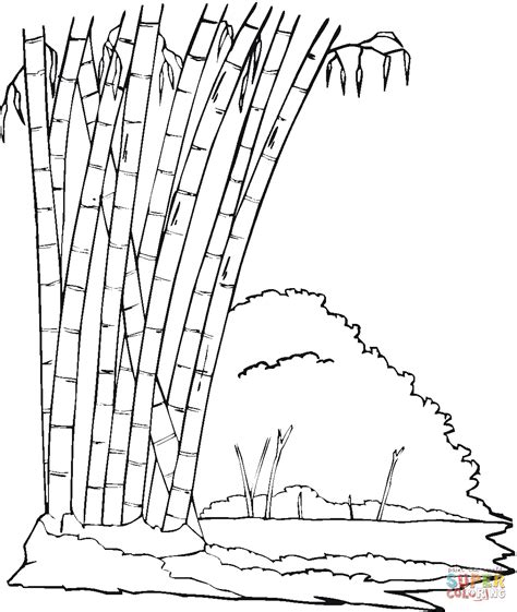 bamboo tree coloring page bamboo in the jungle coloring page free printable