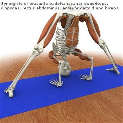libros cadenas musculares gratis tenerifeosteopata cadenas musculares y posturas de hatha