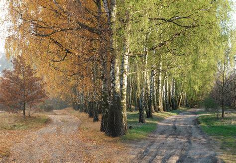 imagenes de otoño y primavera chematierra llega el oto 241 o al hemisferio norte y la