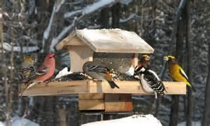 Mix of birds gather around a snow covered bird feeder during a