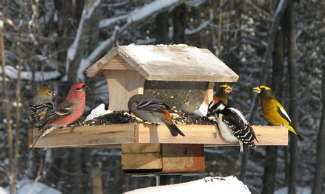 Winter Bird Feeders climate change alters cast of winter birds