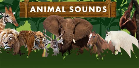 animal sounds  kids amazoncouk appstore  android