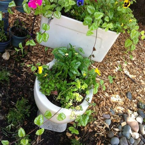 Potty Planters by 17 Best Images About Landscaping On Gardens