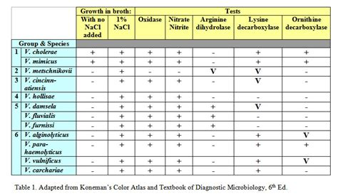 carbohydrates used for differentiating bacteria shellfish identification chart search results calendar