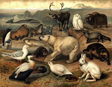 la fauna pictures medio ambiente la flora fauna y suelo salud p 250 blica y algo m 225 s