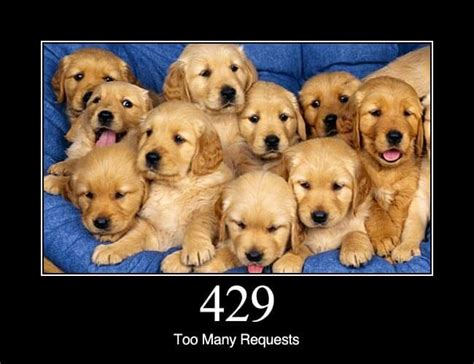 429 too many requests dogs explain what different http status codes mean