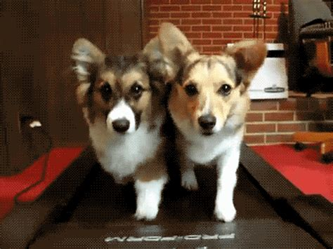 corgis shemazing 7 fitness myths that you need to stop believing right now