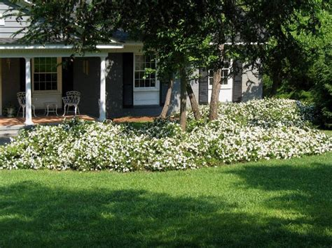 Landscaping Ideas For Small Yards Simple Gardenia Augusta Radicans Plant Wish List Pinterest