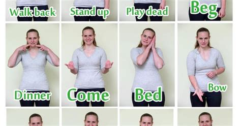 puppy in sign language tricks to your deaf sign language language and sad