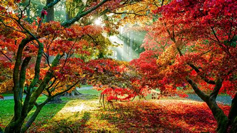 top 10 pictures of trees for day trees hd wallpaper 2015