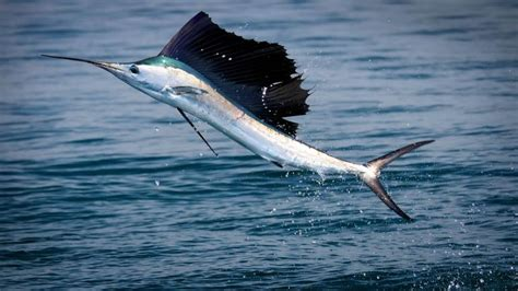 What Is The Fastest Photos 10 Sea Creatures