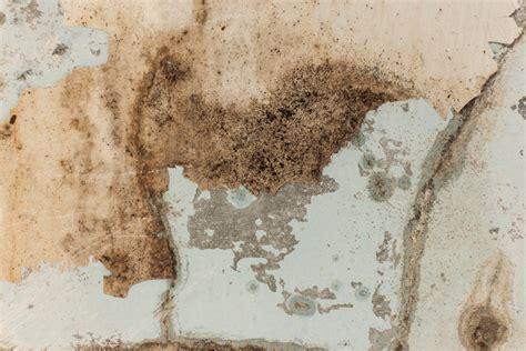 schimmel im mauerwerk bekämpfen feuchtigkeit in der wand feuchtigkeit in der wand w nde