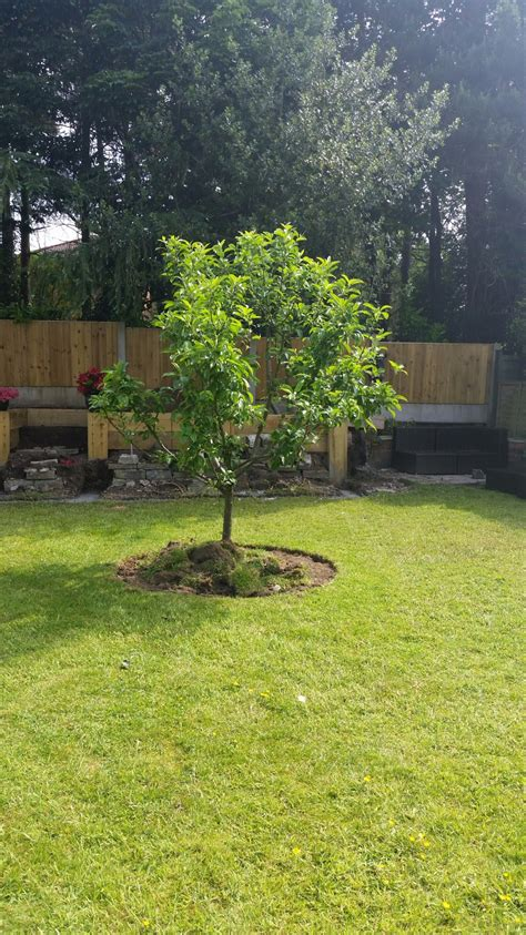 Apple Tree Landscape Design What Can I Grow Small Apple Tree Gardening Forum