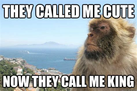 Ape Meme - they called me cute now they call me king planet of the