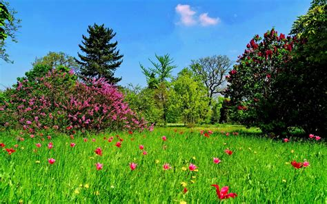 wallpaper abyss spring spring field full hd wallpaper and background image