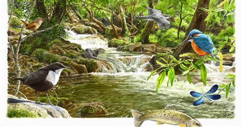 imagenes de ecosistemas naturales desarrollo sustentable 2 1 el ecosistema