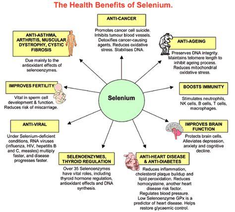 Selenium And Mercury Detox by Selenium Benefits Supplements Health