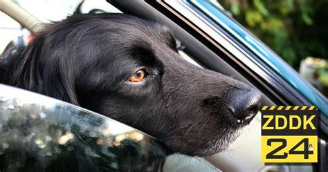 Hund Im Auto Hitze by Hund Bei Hitze Im Auto Gelassen Mimikama