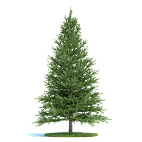 3d conifer tree cgtrader