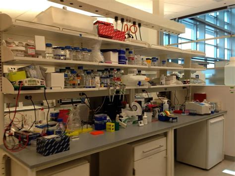 lab bench 12 more science in the sunshine state scientific american