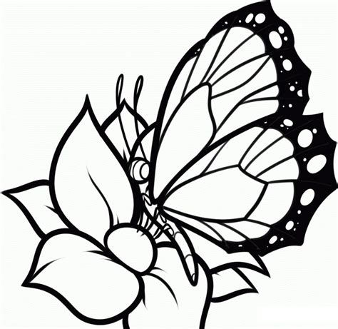 free printable coloring pages flowers and butterflies free printable butterfly coloring pages for kids