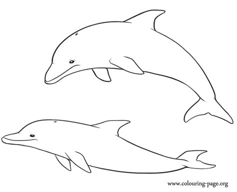 baby dolphin easy coloring pages