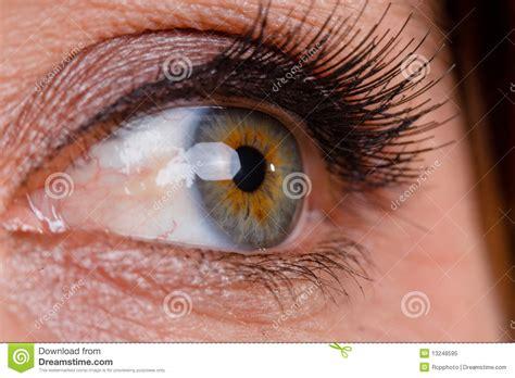 le de bureau fille 2346 macro oeil photo libre de droits image 13248595