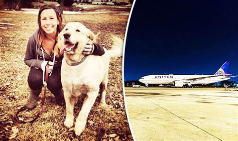 United Airlines Dogs In Cabin by United Airlines Blamed For The Of A Woman S