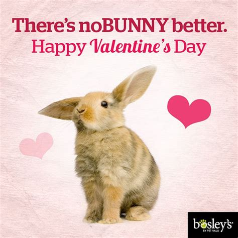 valentines day rabbit 15 best pet pet lover valentines images on