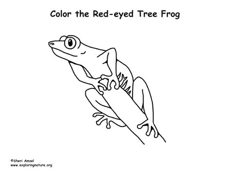 Red Eyed Tree Frog Coloring Page Eyed Tree Frog Coloring Page