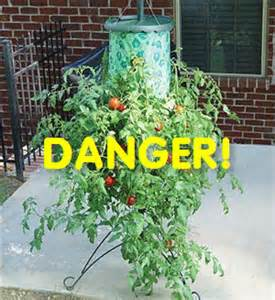 another tomato attack quot topsy turvy quot tomato stand recalled