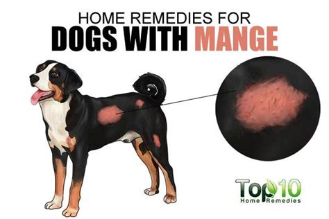 mange home remedy home remedies for dogs with mange top 10 home remedies