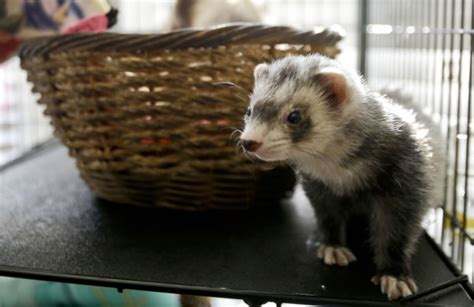 Apartment Living Pets What Pets Are Best For Apartment Living