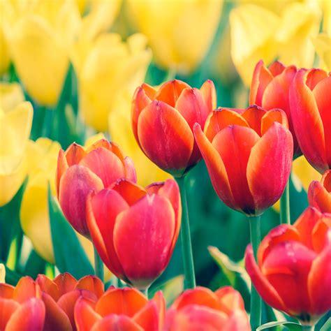 fiori invernali foto bulbi e fiori invernali i pi 249 belli e colorati peraga