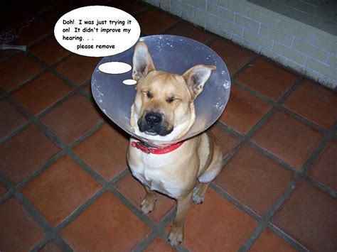 cone of shame wears the cone of shame